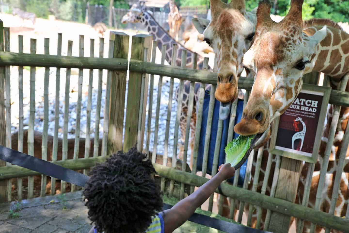 16 Of The Best Things To Do In Atlanta With Kids