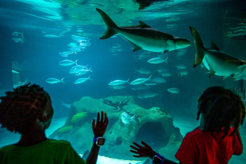 kids enjoying at Florida Keys Aquarium Encounters