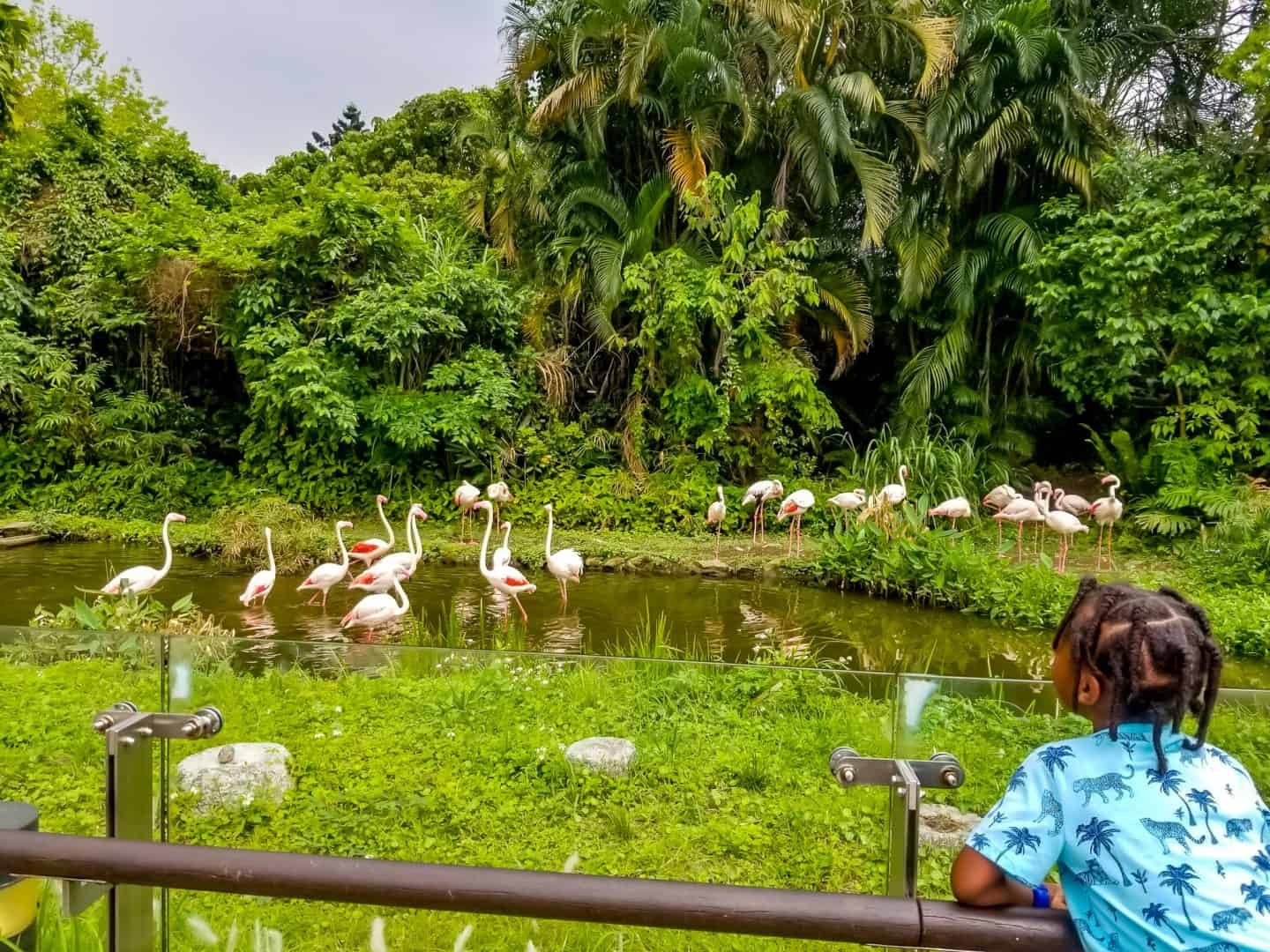 visit Taipei zoo with black kids